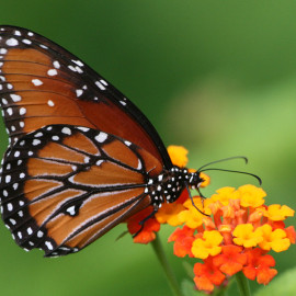 what-to-do-puerto-vallarta-butterfly